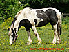Horse in a field - thumbnail