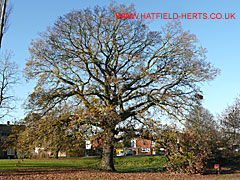 Hatfield gallery oaks in time St albans swimming pool timetable